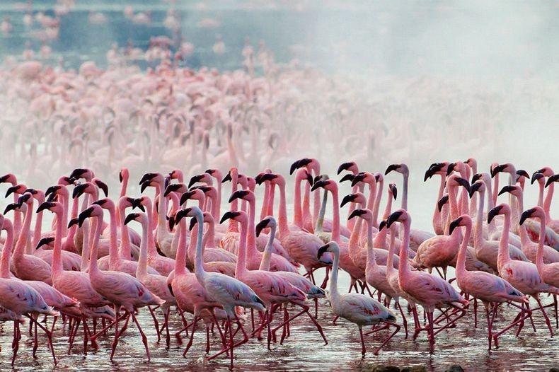 Flamingos at Lake Simbi Nyaima