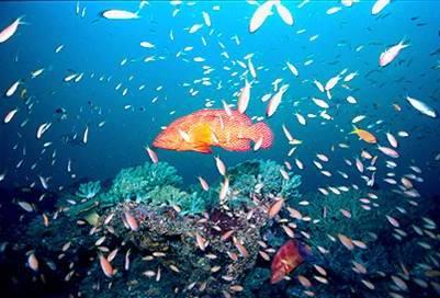 Watamu marine reserve